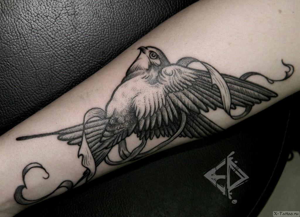 изображение птички