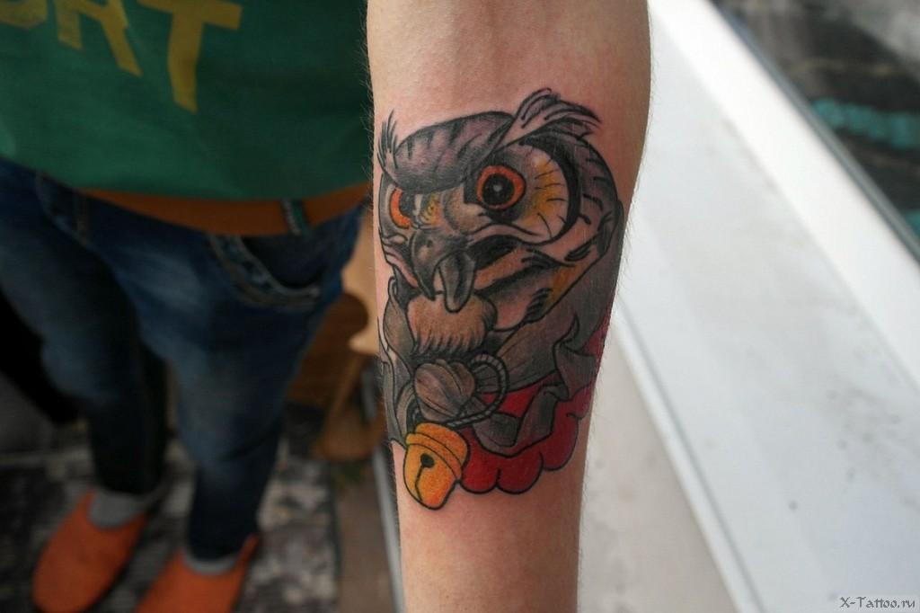 сова на руке