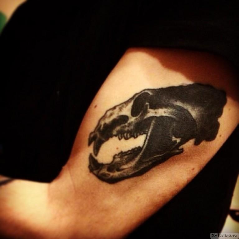 череп медведя на руке
