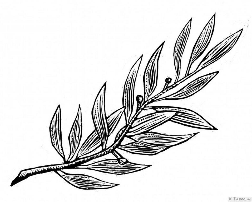 Картинки с листиками веточка для татуировок рисунок