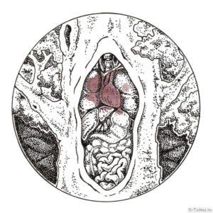 organizm cheloveka