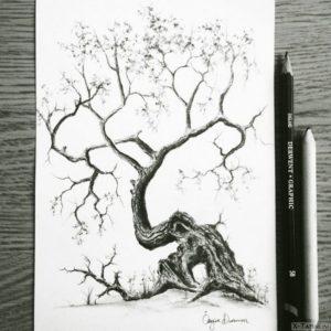 raskidistoe drevo