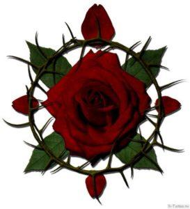 roza s shipami