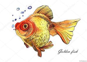 zolotaya rybka
