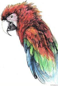 popugay ara