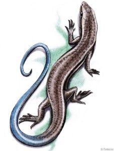 reptiliya
